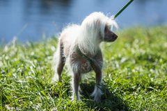 Dog on the leash stock images