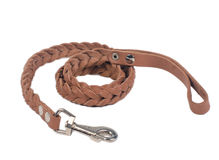 Dog leather leash Stock Image