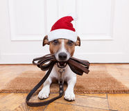 Dog leather leash for christmas Stock Image