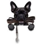 Dog leather leash Stock Photos