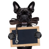 Dog leather leash Royalty Free Stock Photography