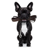 Dog leather leash Stock Images