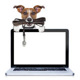 Dog with leather leash Stock Photos
