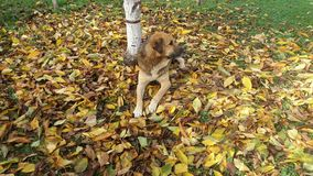 Dog. In leaves Stock Image