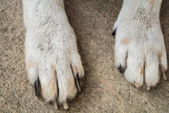 Dog leg. White Dog`s leg which are health and strong Stock Image