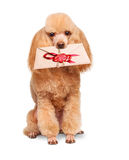 Dog with a letter Royalty Free Stock Images