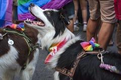 Dog with lgbt symbols royalty free stock image
