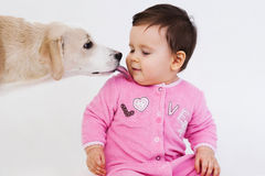Dog licking baby face. Over white background stock image