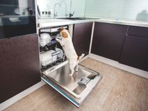 Dog licking dishes in the dishwasher Royalty Free Stock Image