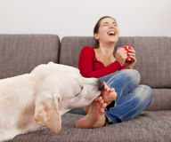 Dog licking the toes. Woman drinking coffee on the sofa with her dog licking her toes royalty free stock image