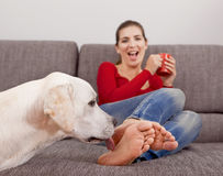 Dog licking the toes. Woman drinking coffee on the sofa with her dog licking her toes royalty free stock photo