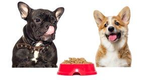 dog licks wants to eat