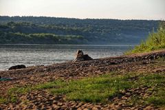 The dog lies on the banks of the river in the evening Royalty Free Stock Photos