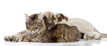 The dog lies on a cat.