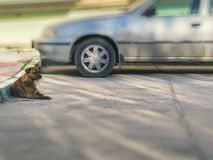 Dog lies on the ground beside the car Stock Images