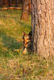 The dog lies near a tree Stock Photo
