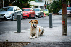 The dog lies in the street empty street of Athens Stock Image