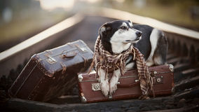 The dog lies on suitcases on rails Royalty Free Stock Photo