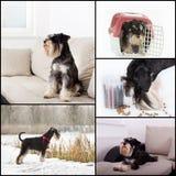 Dog life collage Royalty Free Stock Photo