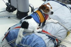 A dog with a life-jacket. Is lying on a sail bag on a boat in a marina Stock Image