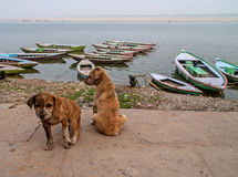 Dog life Stock Photos