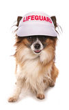 Dog lifeguard Royalty Free Stock Image