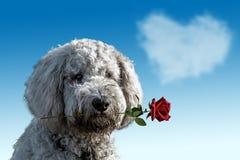 Dog Like Mammal, Dog Breed, Dog, Sky Stock Photography