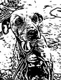 Dog Like Mammal, White, Black, Black And White stock images