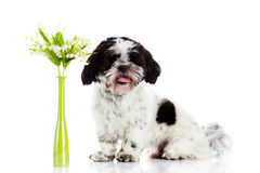 Dog with lily of the valley isolated on white background. spring Stock Images