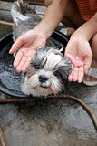 Dog and Liquid soap in hand. Royalty Free Stock Photo