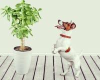 Dog. Listen talk ear animal gossip hear Royalty Free Stock Photo