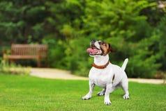 Dog. Listen talk ear animal gossip hear Stock Photos