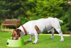 Dog. Listen talk ear animal gossip hear Stock Photo