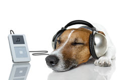 Dog listen to music. With a music player stock photo
