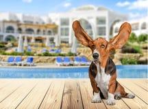 Dog Listening Stock Photos