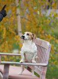 Dog listening commands on bench. Obedient dog standing on bench in park and listening commands from owner Stock Photos