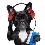 Dog listening music royalty free stock photo