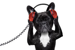 Dog listening music Stock Images