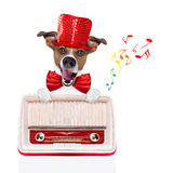 Dog listening radio music Stock Photography