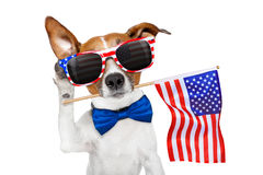 Dog listening on 4th of july. Jack russell dog celebrating  independence day 4th of july with  usa flag in mouth,listening with ear,   isolated on white Royalty Free Stock Images