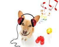 Dog listening to music stock photo