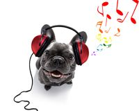 Dog listening to music royalty free stock images