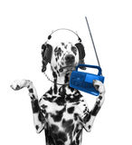 Dog listening to music and dancing. Isolated on white background stock photography