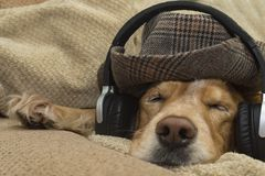 The dog listens to music on the mobile phone while lying on the couch Royalty Free Stock Image