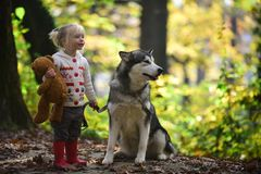 Dog and little girl in autumn forest. Dog husky with child on fresh air outdoor.  royalty free stock image