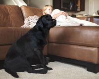 Dog with little girl watching television. Black Labrador Retriever with little girl watching television Stock Image