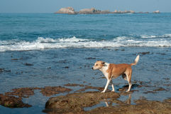 Dog living near the ocean Royalty Free Stock Image