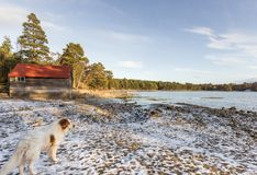 Dog at Loch Vaa in the Cairngorms National Park of Scotland. Dog at Loch Vaa near Aviemore in the Cairngorms National Park of Scotland Royalty Free Stock Image