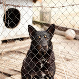Dog locked in the cage behind barbed wire fence Royalty Free Stock Photography