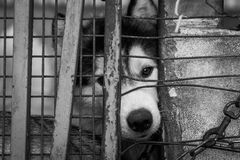 dog locked in the cage Royalty Free Stock Photos